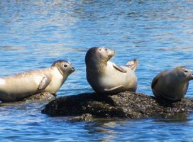 Seal and Bird Watching Adventure Cruise