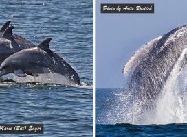 Whale Watching & Dolphin Adventure Cruises